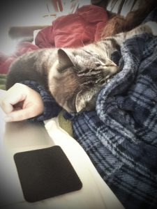 Jasmine the Writing Cat snuggled against Erin Wright
